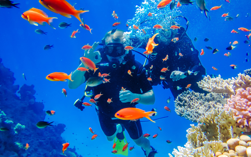 Diving at the coral reefs