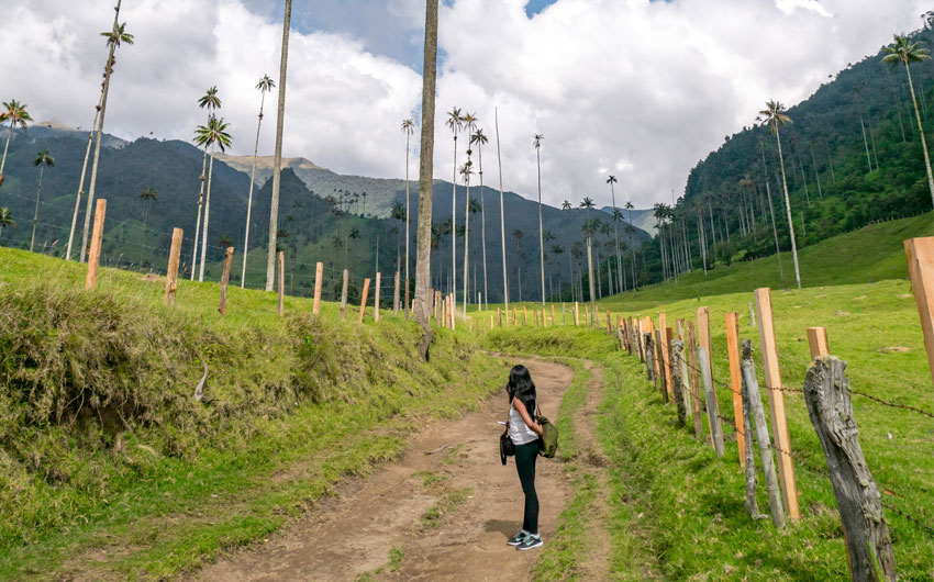 Cocora Valley