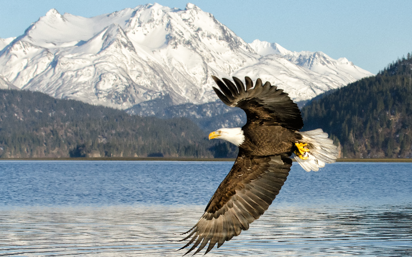 Alaska: America's natural treasure