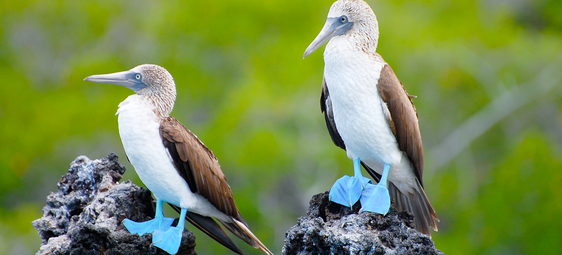 Ecuador and Galapagos Special Offer