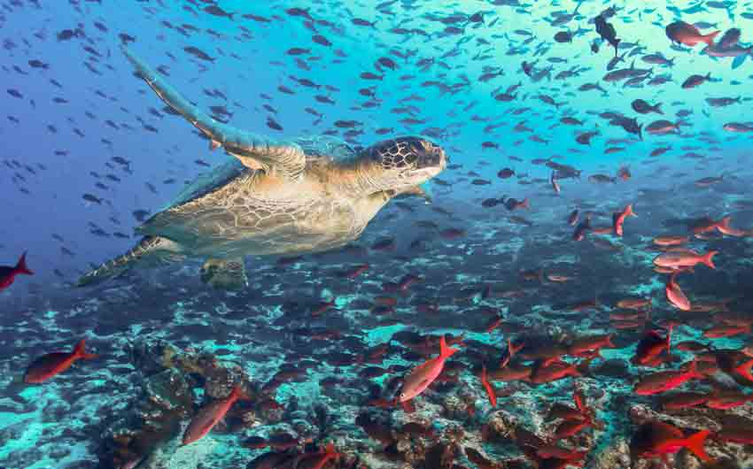 Turtle and tons of fish, Galapagos Islands