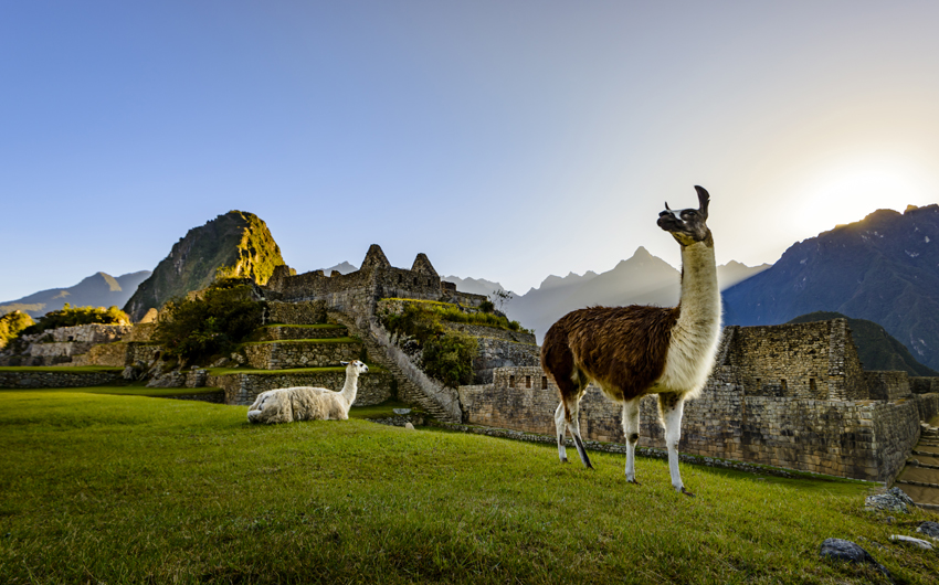 Llamas at first light at Machu Picchu, Peru
