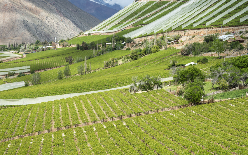 Vineyards of the Elqui Valley, Andes part of Atacama