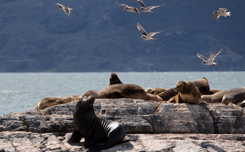Ushuaia Landscape with Sea Lions