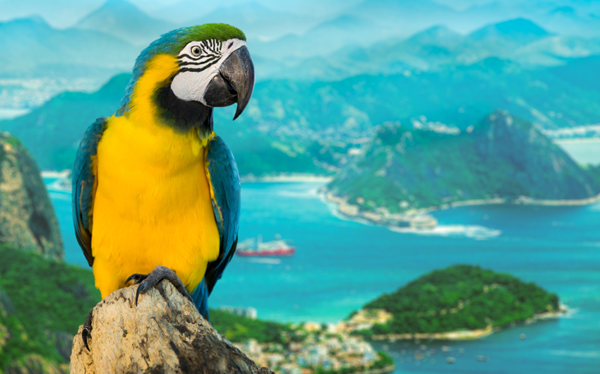 Blue and Yellow Macaw in Rio de Janeiro
