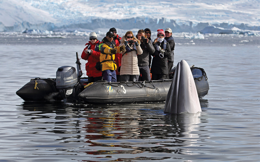 Antarctica Whale Watching