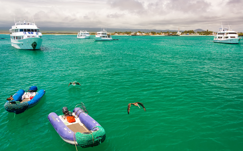 Boat and pelicans in a harbor at Isabela Island in the Galapagos Islands